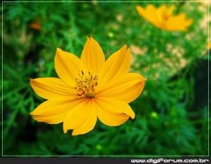 /Amarelo...