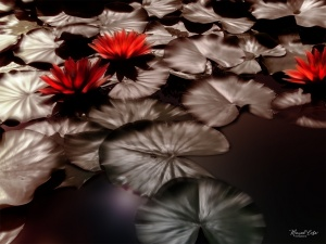 Outros/WATER LILY