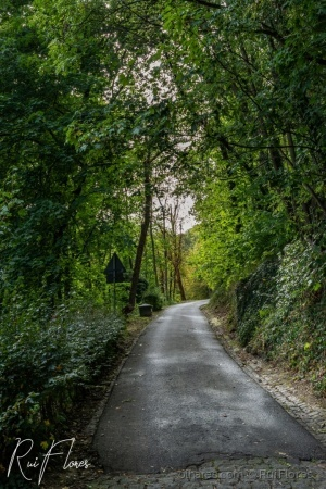 Paisagem Natural/A road into the woods
