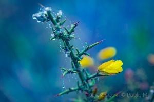 Macro/yellow rain