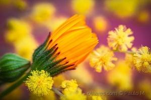 Paisagem Natural/yellow tones