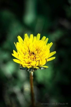 Macro/ the yellow flower and the little insect