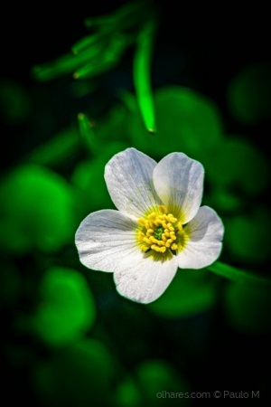 Macro/Uma pequena flor...