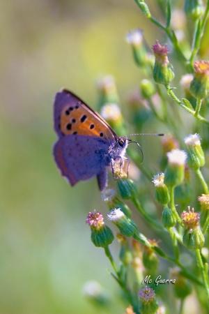 Macro/Butterfly,