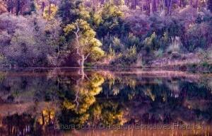 Paisagem Natural/Espelho