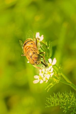 Outros/Bee