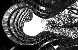 /urban tree