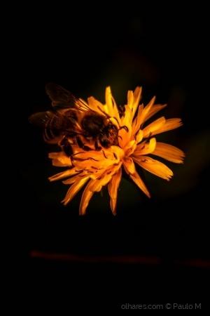 Macro/bee work