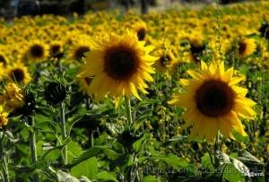 Paisagem Natural/Fields of hope