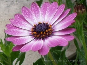Paisagem Natural/Rain, blissful rain
