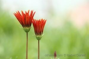 Outros/Solenidade de primavera