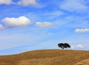 Paisagem Natural/Dia da Terra