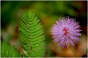 Macro/Verde e Rosa