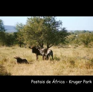 Animais/Postais de África - Krueger Park