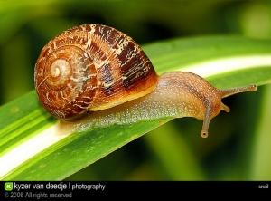 /Snail