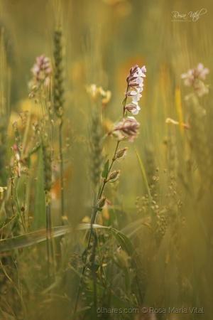 Paisagem Natural/Flores do Campo