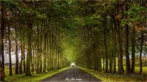 Paisagem Natural/Verde é esperança