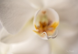 Macro/Closely orchid