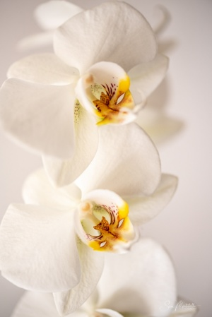 Outros/The fragrant loneliness of orchids...