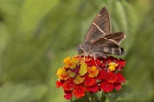 Paisagem Natural/Mariposa