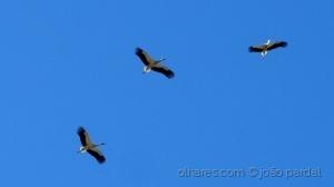 Animais/Voando