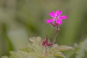 Paisagem Natural/fleur à Robert