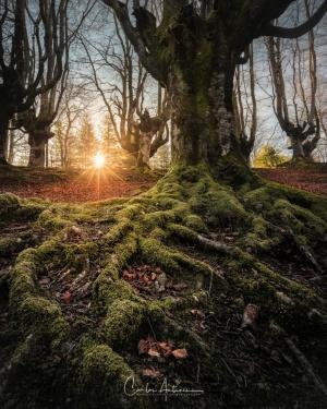 Paisagem Natural/Roots