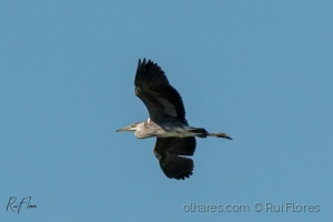 Animais/Flying into the wind