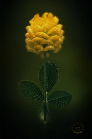 Macro/three leaves