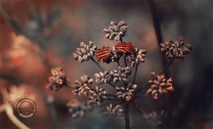 Macro/Striped bugs