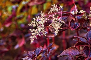 Paisagem Natural/Uma planta exótica