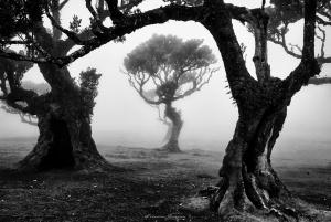 Paisagem Natural/Olhando através do nevoeiro