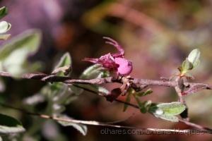 Animais/Arranha cor de rosa