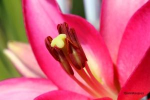 Outros/Pormenor de flor