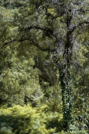 Paisagem Natural/Raw nature