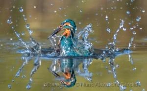 Animais/Splash