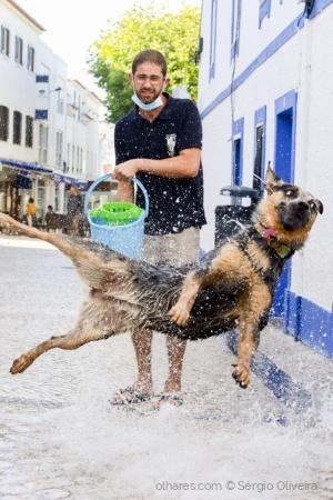 Animais/Em busca das águas perdidas