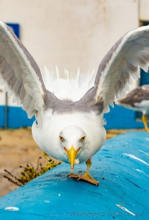 Animais/São 2 animais, uma gaivota e uma pata