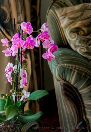 Outros/Recantos floridos..