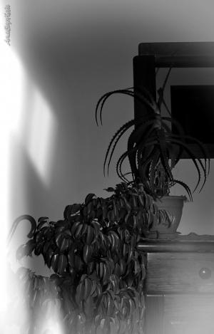 Outros/Um toque de luz