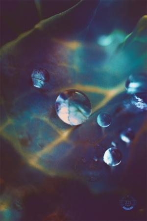 Macro/Das águas de agosto