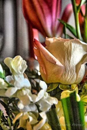 Macro/florido