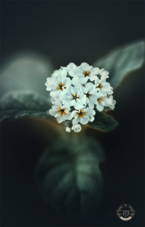 Macro/just flowers
