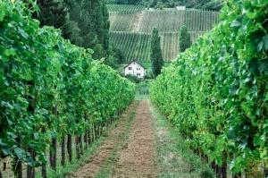 Paisagem Natural/A casa da vinha