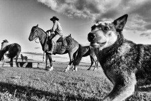 Fotojornalismo/Artigas II