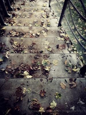 Paisagem Urbana/1 dia de Outono