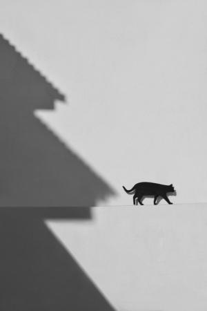 Fotografia de Rua/Black Cat