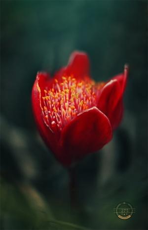 Macro/A flor que desabrocha na adversidade é a mais rara