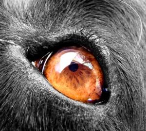 /Bumbo´s Eye