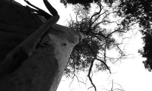 Paisagem Natural/Morremos Árvores...